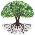 Ancient  tree of life logo Royalty Free Stock Photo