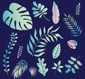 Collection of tropical greenery leaf plant herbs leaves