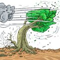Illustration strong winds collapse the tree . Wind Blowing Leaves Off Tree. Royalty Free Stock Photo