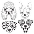 A set of 4 line drawings of dogs faces