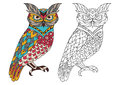Printable coloring book page for adults - owl design, activity to older children and relax adult. vector with Islam