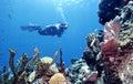 Pristine Reef Stock Photos