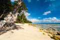 Pristine Undeveloped Sand Beach Forest Low Tide Royalty Free Stock Photo