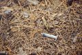 Problems of drug use used syringes found in the forest in the city, unsanitary conditions and threat to others Royalty Free Stock Photo