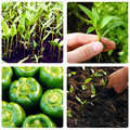 Process of growing vegetables Stock Image