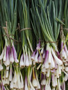 Produce - organic green onions background Royalty Free Stock Photo