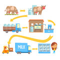 Production and processing milk stages set of vector Illustrations