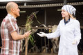 Professional cowman and doctor talking in livestock barn Royalty Free Stock Photo