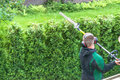 Professional hedges cutting with gasoline telescopic hedge trimmer Royalty Free Stock Photo