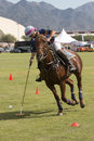 Professional international polo player a practices before the yearly weekend horses and horsepower at westworld in scottsdale Stock Photos
