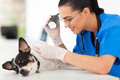 Professional vet doctor examining pet dog skin examining light Stock Photo
