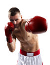 Professionl boxer is isolated on white Royalty Free Stock Photo