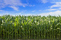 Profile of corn crop shot in south dakota Stock Images
