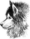 Profile of a dog vector image head husky Royalty Free Stock Photo