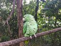 Close Up of Green Feathered Parrot Turning to the Side Royalty Free Stock Photo