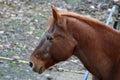 Profile of horse Royalty Free Stock Photo