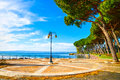 Promenade and pine trees in bolsena lake italy or esplanade Royalty Free Stock Photography