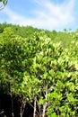 Prong plantation Royalty Free Stock Photo