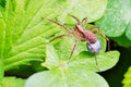 Propagate of spider Royalty Free Stock Photo