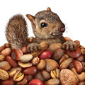Prosperity and savings business concept as a squirrel holding a group of peanuts assorted nuts as cute furry rodent Royalty Free Stock Photo