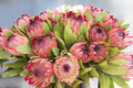 Protea arrangement Royalty Free Stock Photo