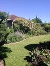 Proteas In A Garden