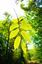 Protect the forest green energy spring time in new young leafs sun rays through tree leafs Royalty Free Stock Images
