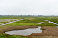 Protected bird environment at tesxel lake on dutch wadden island texel Stock Photography
