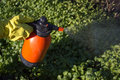 Protecting plant from vermin spring garden work hand sprayer garden Royalty Free Stock Photo