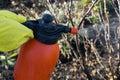 Protecting plant from vermin spring garden work hand sprayer garden Royalty Free Stock Image