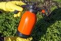 Protecting plant from vermin spring garden work hand sprayer garden Stock Image