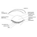 Protective apparatus of the eye illustration Royalty Free Stock Photography