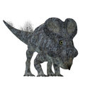 Protoceratops Dinosaur on White Royalty Free Stock Photo