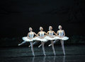 Proud of the four little swan dance-ballet Swan Lake Royalty Free Stock Photo