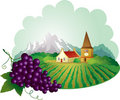 Provence background with grape Royalty Free Stock Photo