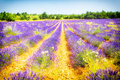 Provence france lavender field landscape in south of Stock Photography