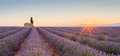 Provence, France, Valensole Plateau with purple lavender field Royalty Free Stock Photo