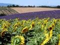 Provence landscape Stock Photography