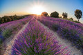 Provence with Lavender field at sunset, Valensole Plateau area in south of France Royalty Free Stock Photo