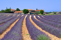 Provence lavender fields and farm france Stock Images