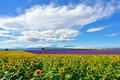Provence rural landscape, France Royalty Free Stock Photo