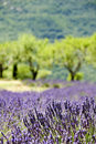 Provence typical landscape Royalty Free Stock Photography