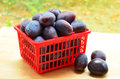 Prune plums fresh picked in red basket Royalty Free Stock Photography