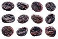 Prunes. Stock Photography