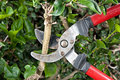 Pruning shears Royalty Free Stock Images