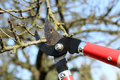 Pruning shears in the garden early spring Royalty Free Stock Photography