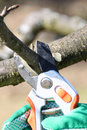 Pruning twigs and branches Stock Images