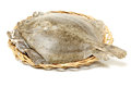 Psetta Maxima (Turbot Fish)