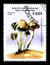 Psilocybe caerulescens mazatgecorum, Mushrooms serie, circa 1996 Royalty Free Stock Photo