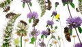 Pszczół składu kobiety pracownik Obraz Royalty Free